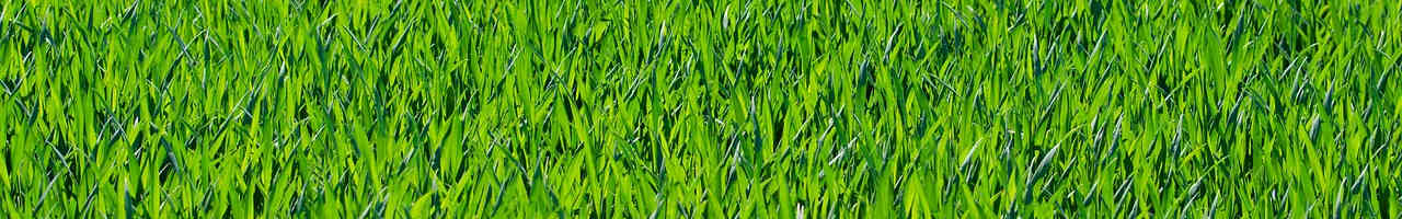 Best Electric Lawn Mowers. Buying Guide and Reviews.